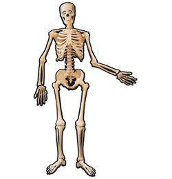 Karton Csontváz Halloweenre