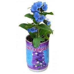 Legyen Saját Nefelejcs Növényed!