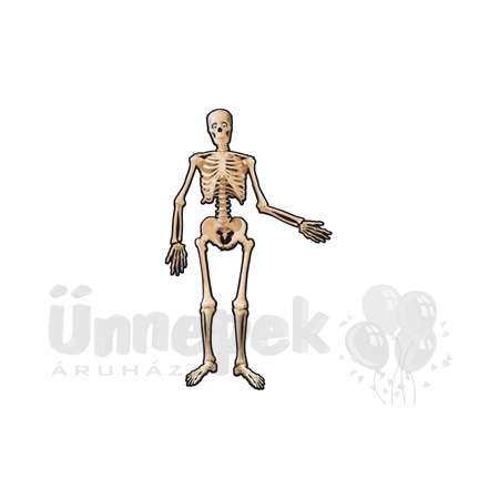 Karton Csontváz - 135 cm