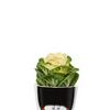 Magic Bobby Kicsi Virágcserép